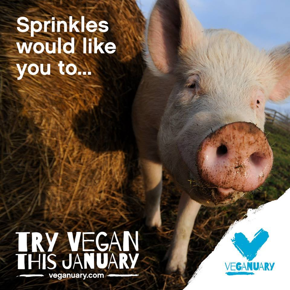 Farm Animal Rights Movement (FARM) Make 2015 an AMAZING year for animals: go #vegan and encourage your friends to join you, too! The Veganuary campaign can help you out for your first month. Visit www.Veganuary.com for more info!